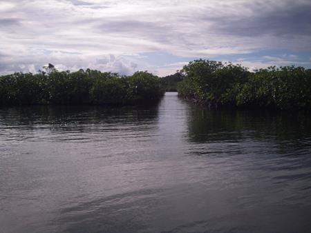 Künstliche Dingidurchfahrt zwischen den Mangroven