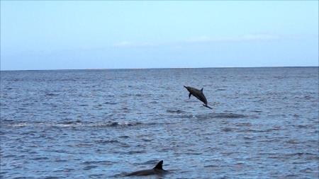 Delfinweitsprung