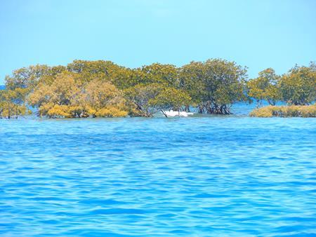 Mangroveninsel als Schutz gegen Wind und Wellen