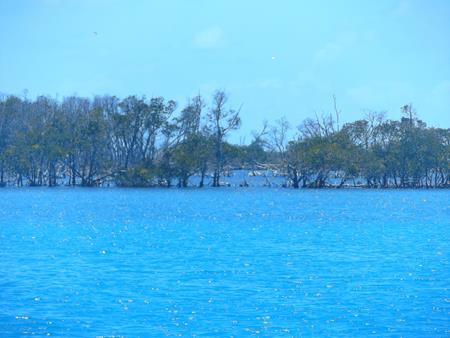 Night Island: Gesäumt von Mangroven