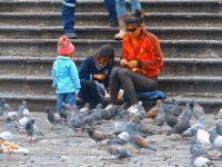 Tauben fast wie in Venedig