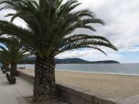 Portosin: Palmen, Sandstrand und Meer
