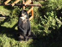 Zoo - Ecuadorianische Tierwelt: Brillenbär