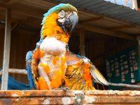 0 Papagei in der Wildtierauffangstation