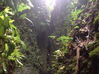 20 Amazonaspfade
