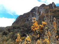 Cajas: Tundra und Berge