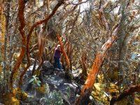 Cajas: Wanderweg durch den Tundrawald