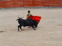 Canar: Stier und Matador