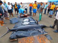 Große Fische werden vor Ort zerlegt