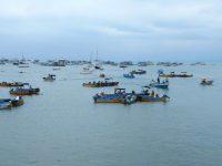 Riesige Fischereiflotte in Manta