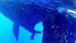 Gegenwinds Unterwasserparasiten