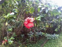 Tropische Blumenpracht