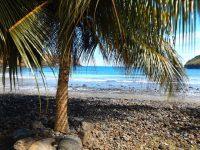 Palmen Strand und türkises Meer
