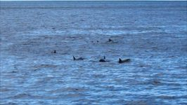 Delfingruppenschwimmen