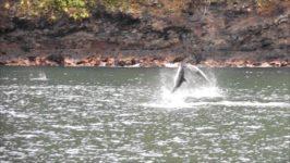 Delfinpirouetten