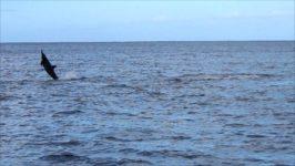 Ein Delfin will hoch hinaus