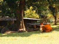 Fleischlieferant im Garten