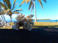 Korallenstückchen liegen überall herum