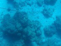 Grobe Korallenblöcke halten unsere Ankerkette fest