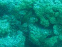 Muräne guckt aus ihrem Versteck