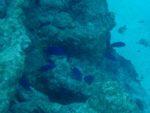 Die Tuamotos – Südseerythmus in Makemo