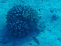 Fast wie Aquariumfische