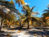 Fakarava - palmenbewachsener Korallenstreifen
