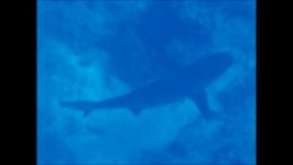Wir schnorcheln über dem Hai