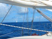Seltenheit: Wir segeln nicht alleine