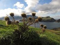 Madeira unsere erste Ankerbucht die Enseada da Abra