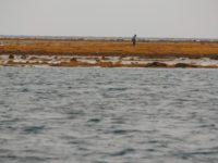 Fischer auf dem Riff bei Niedrigwasser