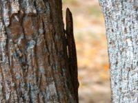 Gecko sucht Deckung