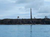 Île des PIns: Bizarre Baumriesen am Strand