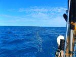 Von Neukaledonien nach Australien