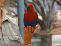 Farbenprächtige Papageien