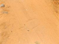 Känguruspur im Sand