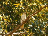 Papageien in fast jedem Baum