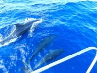 Delfine leisten uns Gesellschaft