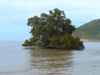 Baum bei Hochwasser