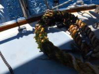 Unsere Ankerleine nach drei Wochen im Wasser