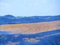 Sargasso Kraut blockiert das Ruderblatt unser Windsteuerung