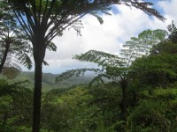 Martinique: Grüne Insel