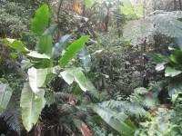 Martinique: Urlald in Europa