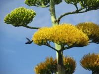Wenn man schnell ist erwischt man ihn: den Kolibri