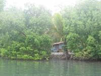 Leben in den Mangroven