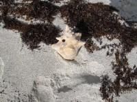 Muschelgehäuse sind hier nur Abfall