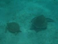 Unterwasserblick vor Baradel