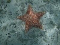 Unterwassergründe vor Baradel