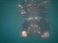 Moliniere Point: Unterwasser Skulpturenpark - Schnorchelerlebnis