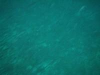 Moliniere Point: umgeben von Fischschwärmen